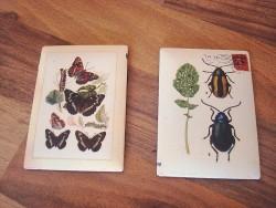 Duo de magnets scarabées et papillons style champêtre
