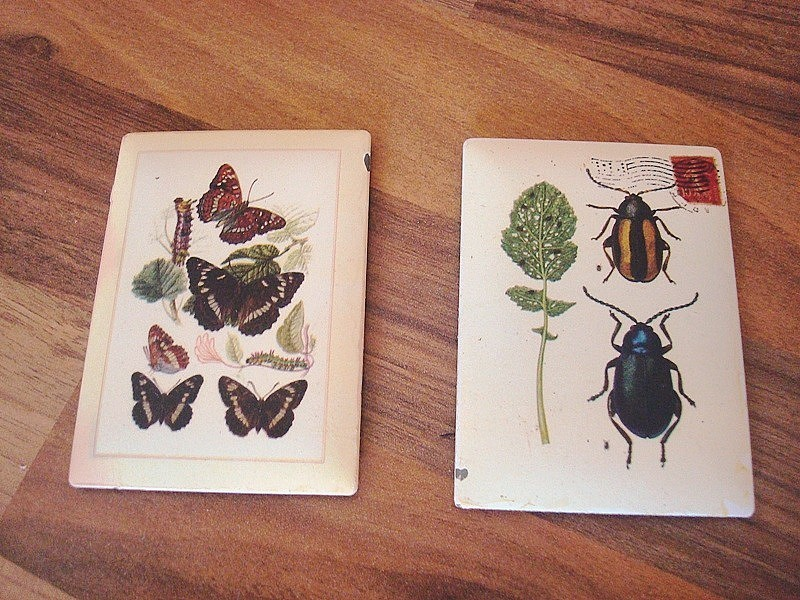 Duo de magnets scarabées et papillons pour cuisine campagne chic